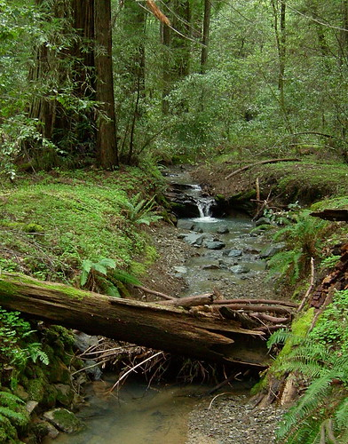 Earth Day at Armstrong Redwoods Healdsburg
