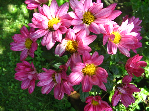 Cosa piantare in giardino nel mese di Marzo