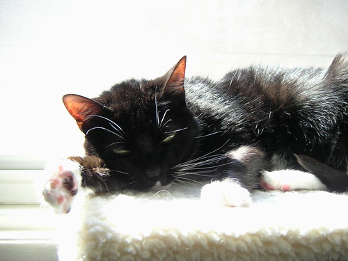 Cat sleeping on window perch in the sunlight