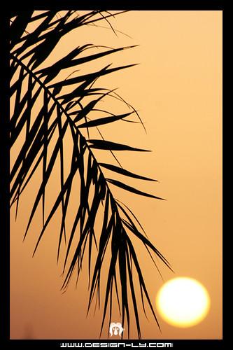 world africa heritage sahara 350d italian sand desert dunes south muslim north palm arabic libya tripoli digitalrebelxt colony touareg libyan ghadames benghazi libia libye على منصور libyen fezzan ubari ليبيا líbia kissndigital الصغير jamahiriya libië المصور libiya liviya libija غدامس либия فزان ливия լիբիա ลิเบีย lībija либија lìbǐyà 利比亞利比亚 libja líbya liibüa livýi
