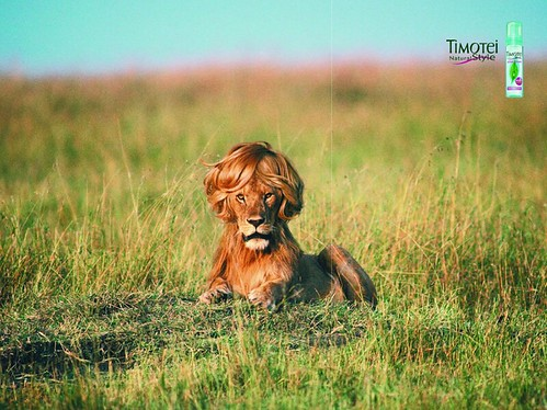 Tomotei Shampoo Lion'