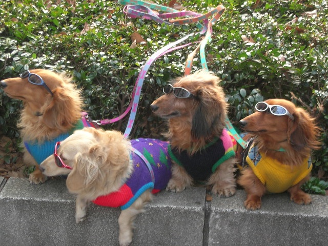 Image Result For Dog Silly