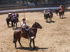 team penning(0.0), racing(0.0), endurance riding(0.0), pack animal(0.0), reining(0.0), jockey(0.0), barrel racing(0.0), animal sports(1.0), rodeo(1.0), equestrianism(1.0), western riding(1.0), mare(1.0), equestrian sport(1.0), sports(1.0), western pleasure(1.0), charreada(1.0),