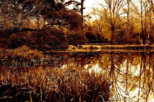 winter blackandwhite bw brown reflection nature sepia landscape ilovenature pond beige louisiana mrgreenjeans gaylon cohnsarboretum gaylonkeeling