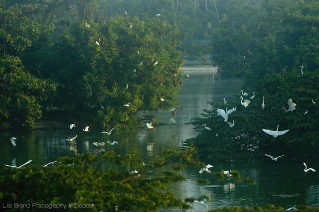 balance of life... ♫ a symphony of white notes ö_ö... egrets from bali ♫