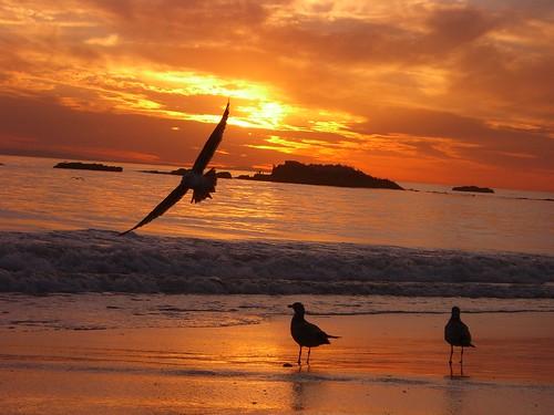 ocean sunset red sky cloud sun seagulls beach water yellow rock clouds sunrise fly flying sand rocks seagull wave laguna lagunabeach orance fbook misfotosfavoritas