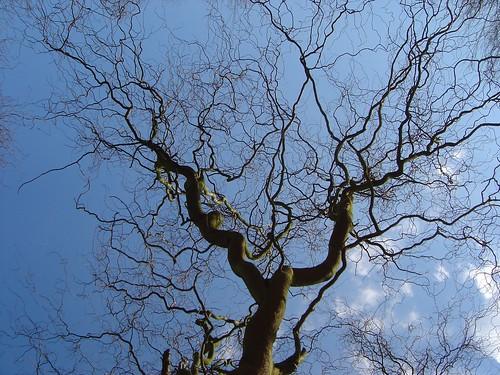 un arbre qui me ressemble...