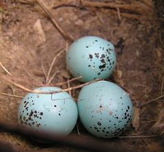 easter egg, egg, close-up,