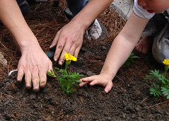 hand, agriculture, sowing, flower, leaf, soil, plant, limb, leg,