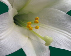 Lily Center
