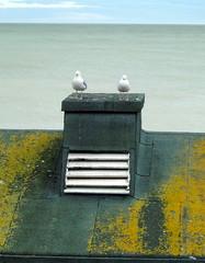 Sea Gulls in Eastbourne