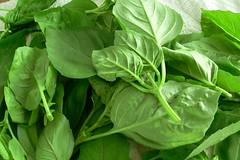 vegetable, komatsuna, leaf vegetable, herb, food, basil,
