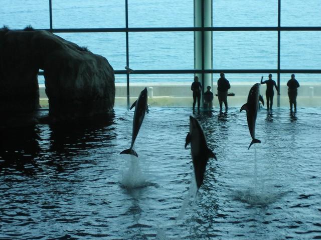 Aquarium Parking In Coney Island