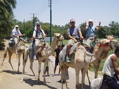 Egyptian trail ride...