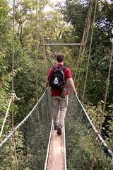 adventure, suspension bridge, walking, canopy walkway, forest, rope bridge, jungle, bridge,