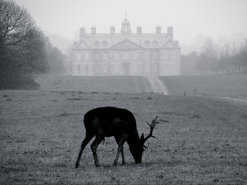 Black & White Belton Buck