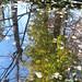 Greenough Park - Fall