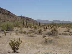 Arizona - Sonora, Mexico
