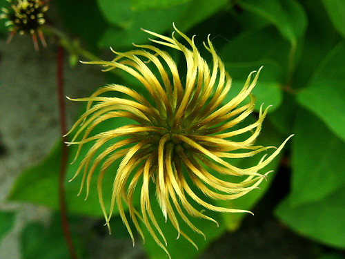 Nature's Pinwheel