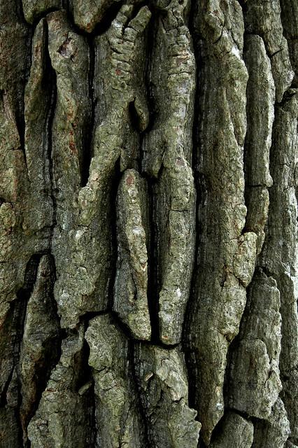 Texture Rrific Tree Bark Flickr Photo Sharing