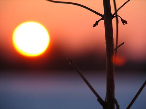 winter sunset sun stick penttilänmäki