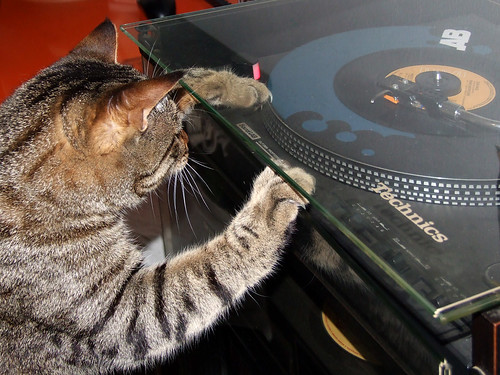 Gatto Mimmo scratching deejay
