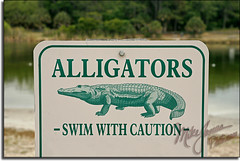 Watch Dem' Gators