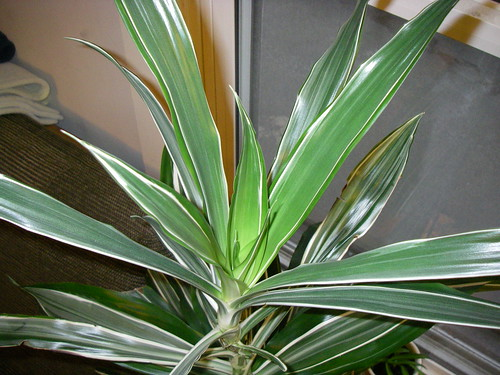 Image gallery house plant id - House plant identification guide by picture ...