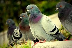 parakeet(0.0), animal(1.0), pet(1.0), fauna(1.0), beak(1.0), stock dove(1.0), bird(1.0), wildlife(1.0),