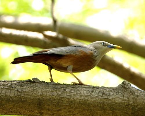 Spot birds in Dhaka - Things to do in Dhaka
