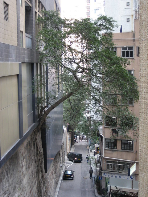 Hong Kong Tree