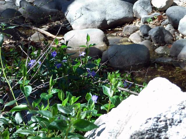 Bear Canyon Trail 003