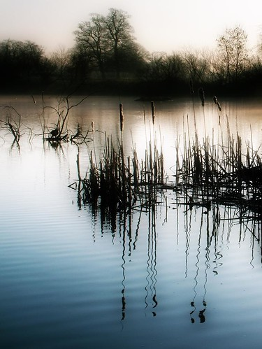 winter mist lake water photoshop reflections reeds buckinghamshire slough kevday rushes langleypark