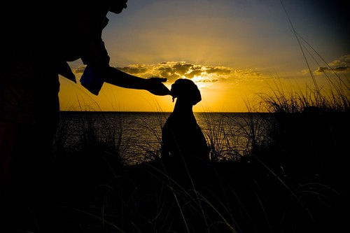 ocean sunset sea dog pet pets sun dogs water beautiful animals silhouette sunrise interesting sand canine cattails orangesky mansbestfriend companion owner haskins viszla nicholaus yellowsky petphotographer nicholaushaskinsphotography haskinsphotography stickerburs