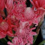 Pink Flowers - Krabi, Thailand