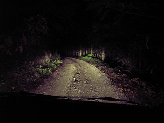 Small forest road in the darkness
