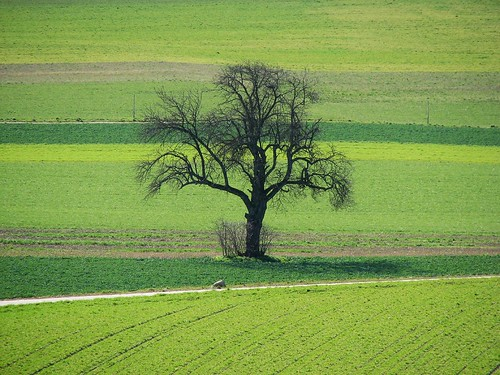 Tree on Greens
