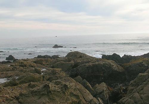 Moonstone Beach Cambria Ca Dogs