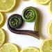 Fiddlehead Fern and Lemon Slices by libraryman