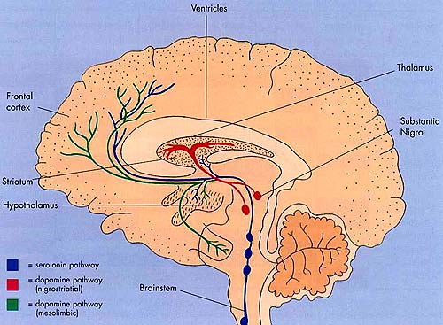 intracranial flickrBrain Diagram Intracranial Flickr #5