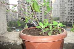 flowerpot, soil, tree, houseplant,