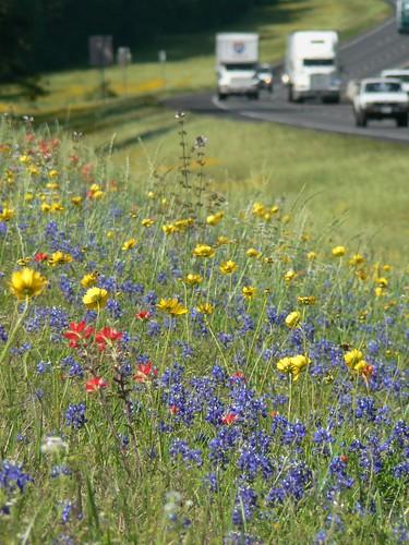 flowers trucks wildflowers bluebonnets i45