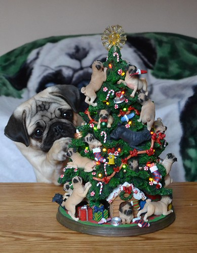 Boo And The Pug Christmas Tree