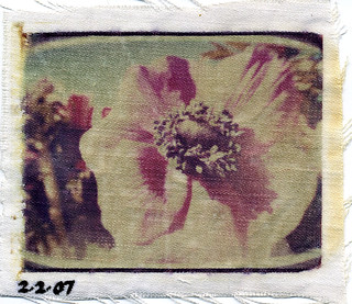 anemone on cloth