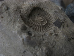 carving, macro photography, geology, fossil, close-up,