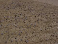 field, soil, sand, geology, mudflat,