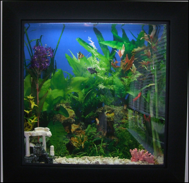 picture frame fish tank flickr photo sharing