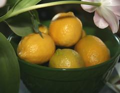citrus, orange, lemon, vegetarian food, plant, meyer lemon, kumquat, produce, fruit, food, tangelo, sweet lemon, bitter orange, tangerine, mandarin orange,