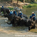 Elephants taking a Bath - Lampang, Thailand