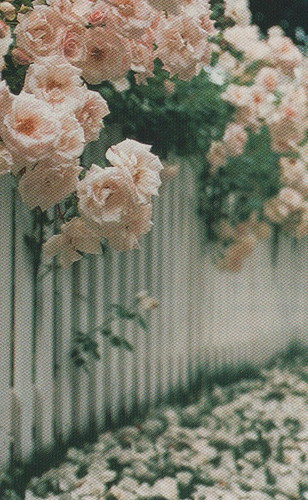 Pretty Picket Fence